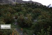 خطر در کمین روستاهای هدف گردشگری الیگودرز