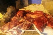 توقیف خودروی حامل لاشه گراز وحشی در خرمآباد
