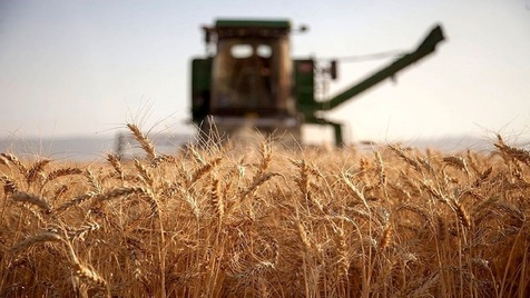 مجلس قیمت خرید گندم را تصویب کرد: هر کیلو 5 هزار تومان