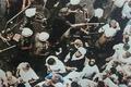 فیلم کمتر دیده شده از حج خونین سال 66 به روایت شهید آوینی