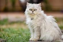 شیطنت گربه در میان نیایش صبحگاهی کشیش!