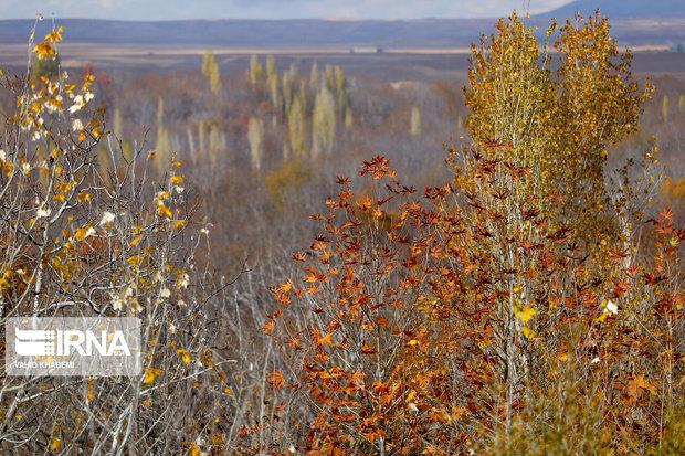 شور شیرین پاییز در باغهای خراسان شمالی