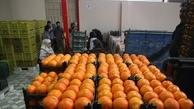تاکید بر کیفیت میوه شب عید در قم