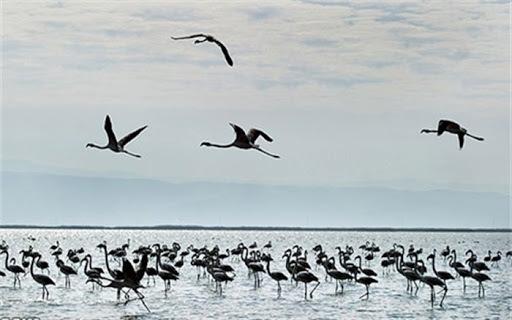 مهاجرت ده ها هزار پرنده به تالاب های استان اردبیل