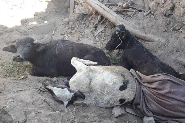 خسارت ۳۰۰ میلیارد ریالی زلزله به بخش کشاورزی آذربایجانشرقی