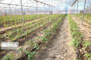 ۴۳ طرح تولیدی و زیربنایی کشاورزی در اردبیل افتتاح میشود