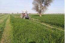 برداشت یونجه از زمین های کشاورزی حاجی آباد آغاز شد
