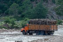 قاچاق چوب، مرگ خاموش محیط زیست شهرستان طارم