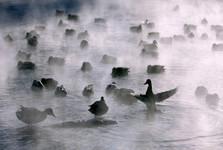 چین ارتش 100هزار اردکی خود را برای جنگ به پاکستان می فرستد