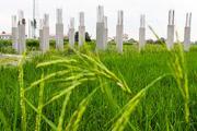 شناسایی ۶۷۷ مورد تغییر کاربری غیرمجاز اراضی کشاورزی در لرستان