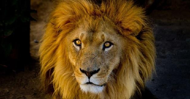 رفاقت مرد اماراتی با حیوانات وحشی! + فیلم