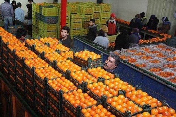 2 هزار و 650 تن سیب و پرتقال برای توزیع در عید خریداری شد