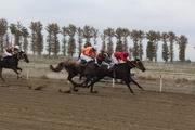رقابت 59 راس اسب در هفته ششم کورس پاییزه گنبدکاووس