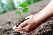 هفته منابع طبیعی فرصتی برای ترویج درختکاری است