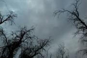 بارش پراکنده باران پدیده قالب جوی قزوین است