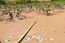 ۴۷۲ پرونده خسارت سیل در بخش کشاورزی به بانک های قزوین ارسال شد