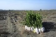 کاشت نهال به جای رفتن به زندان ۱۶۰۰۰ اصله نهال غرس می شود
