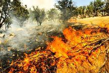اراضی منابع طبیعی شمیرانات در خطر آتش سوزی قرار دارند
