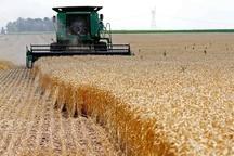پایان فصل خرید گندم و کلزا و تسویه حساب با کشاورزان مازندران