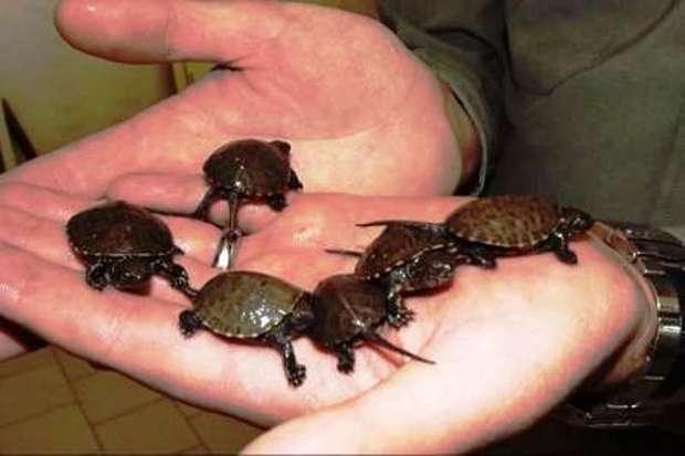 خرید و نگهداری برخی جانوران درنوروز به محیط زیست لطمه می زند