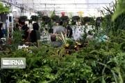 کرونا برپایی نمایشگاه سراسری گل و گیاه اراک را  لغو کرد