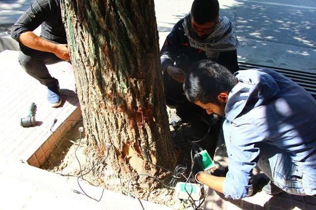 یکهزار اصله درخت در شهرکرد توموگرافی شد