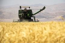 برداشت گندم در کهگیلویه و بویراحمد 40 درصد کاهش یافت