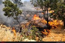 ۴۷ هکتار از مراتع و جنگلهای شهرستان دشتی در آتش سوخت