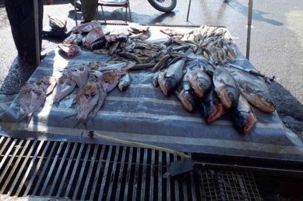 مردم از دستفروشها ماهی نخرند