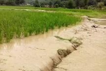 سیل به کشاورزی داورزن خسارت زد