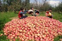 سالانه 920هزار تن محصول کشاورزی در بروجرد تولید می شود