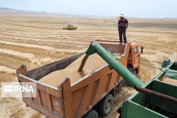 چهار هزار و ۴۰۰ میلیارد ریال از طلب گندمکاران استان مرکزی پرداخت شد