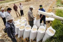 مجوز صادرات شلتوک خوزستان صادر شد