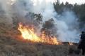مهار آتش سوزی نیزارهای ساحلی اهواز