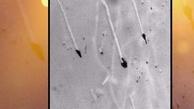 ساخت ذرات نانو از جوانه چای با قابلیت نابودی باکتری ها