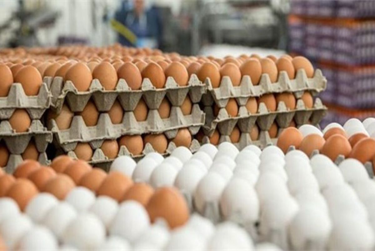تخم مرغ باز هم گران شد و جای گوشت را گرفت!