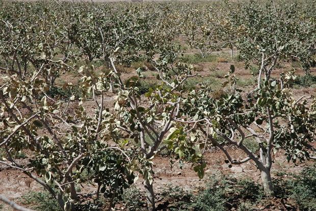 مدیریت بحران استان تهران: کشاورزان مراقب سرما زدگی باشند