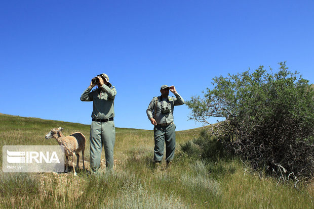 ۲ محیطبان منطقه حفاظت شده سبزکوه چهارمحال و بختیاری زخمی شدند