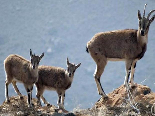 شکار در برخی مناطق محیط زیست بیجار ممنوع شد