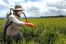 99 شبکه مراقبت از اراضی گندم و جو در قزوین فعال هستند
