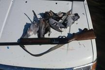 شکارچی کبوتران جنگلی در شهرستان البرز دستگیر شد