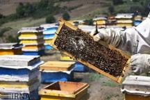 950 تن عسل در زنبورستان های استان قزوین تولید می شود