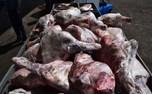 2 تن گوشت فاسد در تهران کشف شد