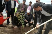 31هزار اصله نهال در شهرستان های غرب کرمانشاه غرس شد