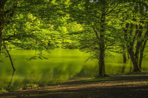 چورت، یک جنگل رمزآلود غرق شده زیر آب