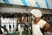 صادرات ۴ میلیون و ۹۲۵ هزار دلار محصولات لبنی زنجان به خارج از کشور